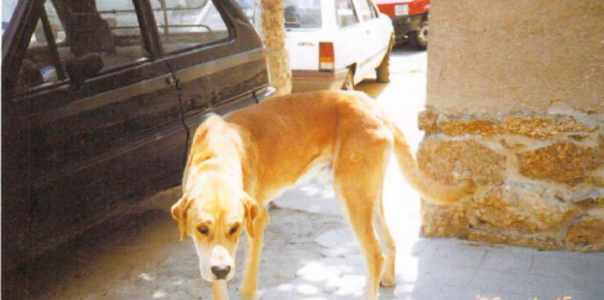La alimentación del perro con insuficiencia renal crónica