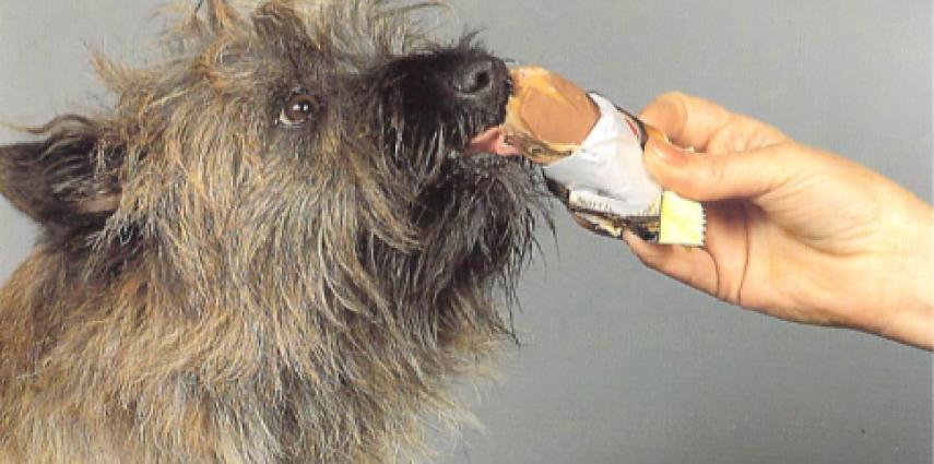 La alimentación del perro hepático